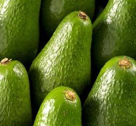 Shepard Avocados