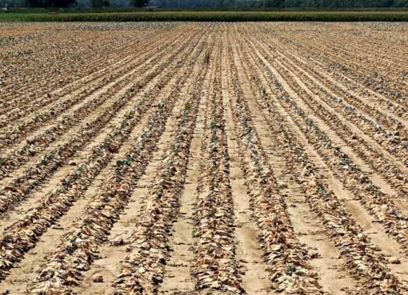 Drought effecting the fresh produce industry
